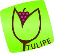 Association Tulipe