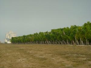 Vignoble des Hauts de talmont